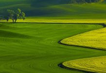 Green Grass Field Wallpaper.