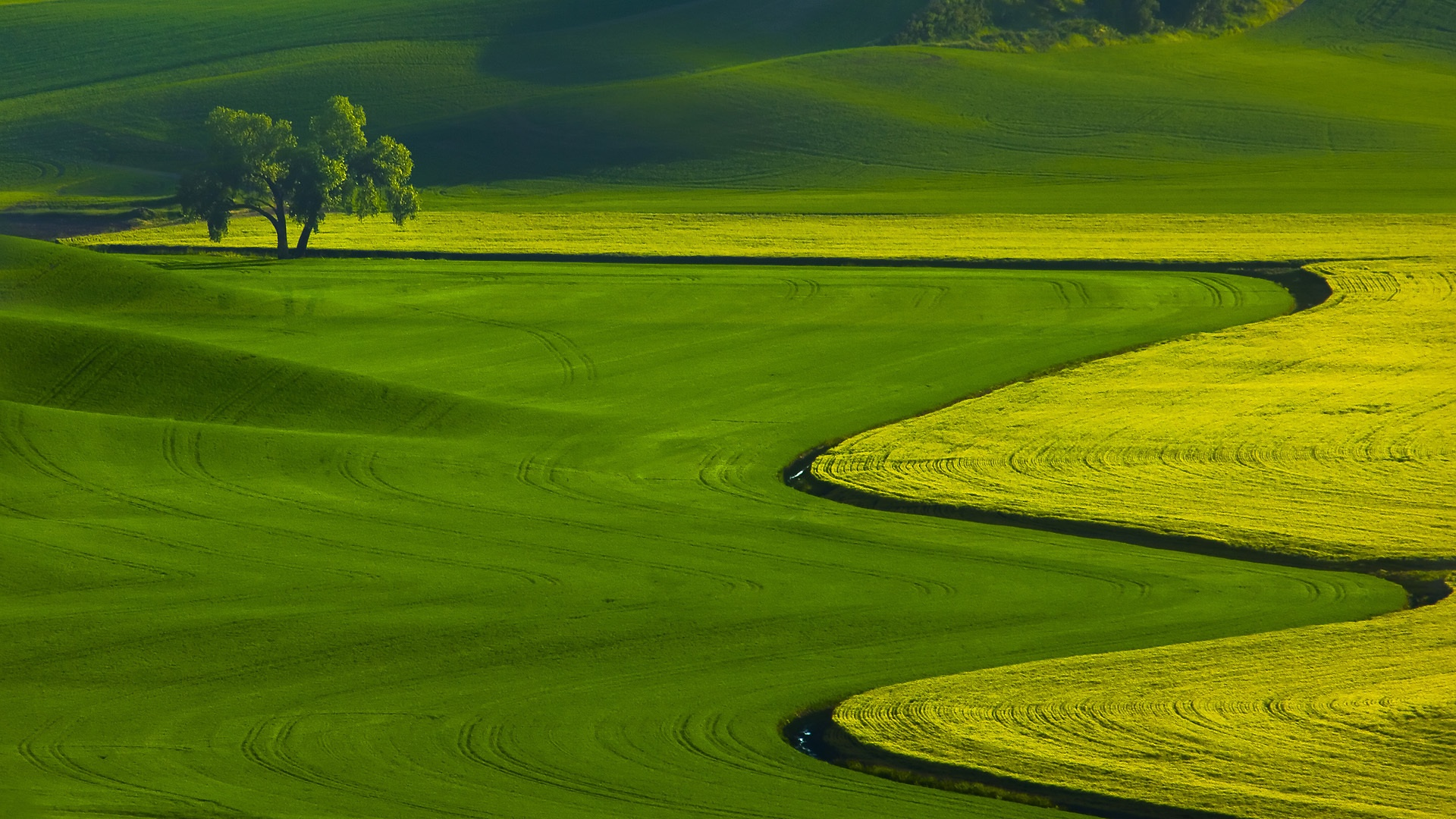 Full hd wallpaper full hd 1080p wallpaper hd widescreen desktop - Green Grass Field Wallpaper