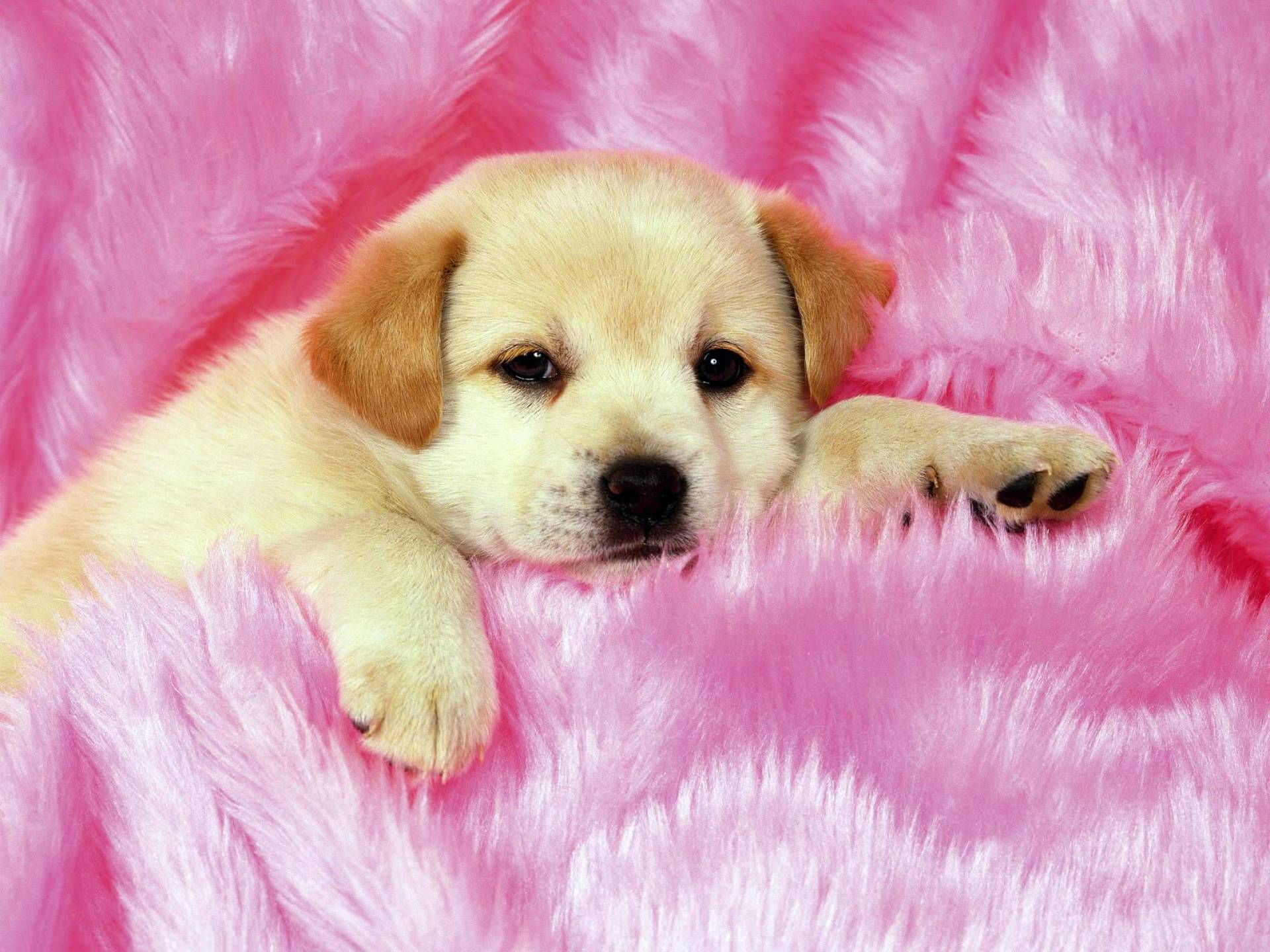 cute puppy hd wallpapers | pixelstalk