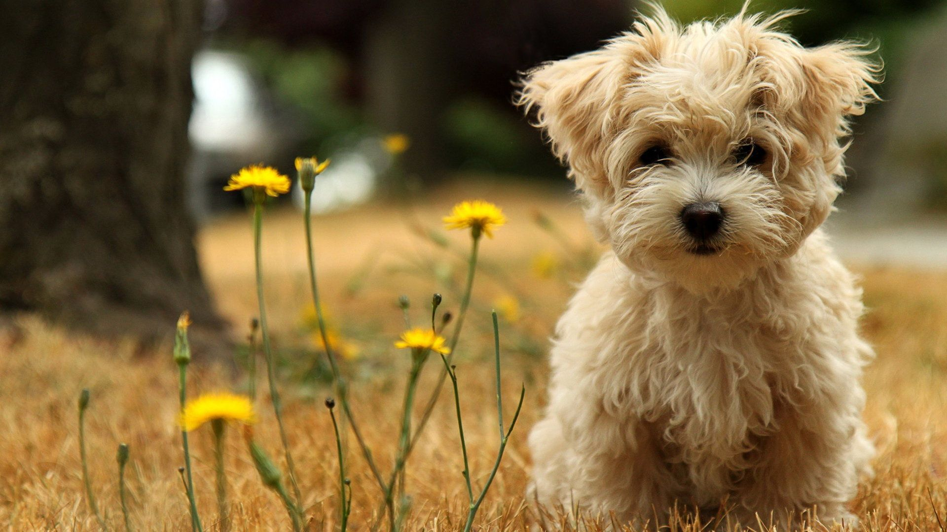 photo collection cute wallpapers for laptop