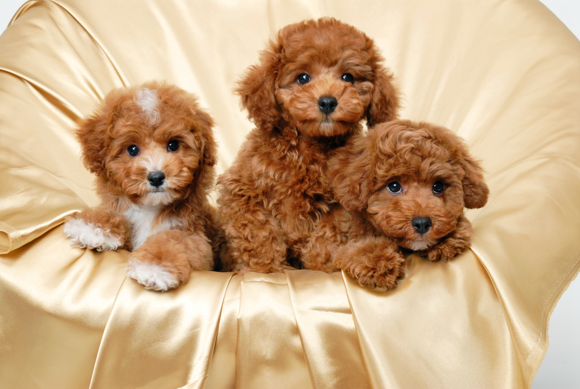 free download cute puppy wallpapers pixelstalk net