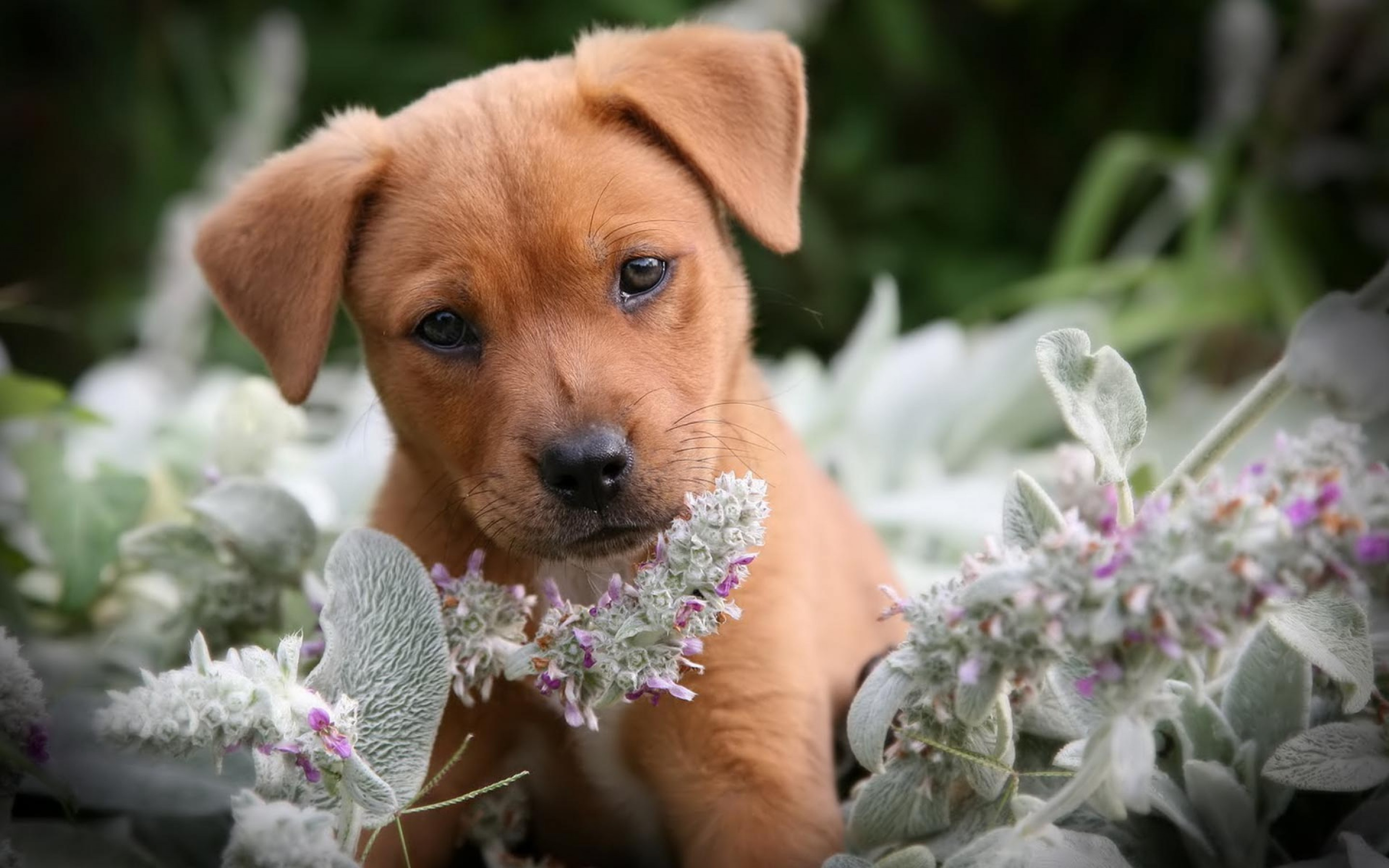 Hd Cute Puppy Backgrounds Pixelstalk Net