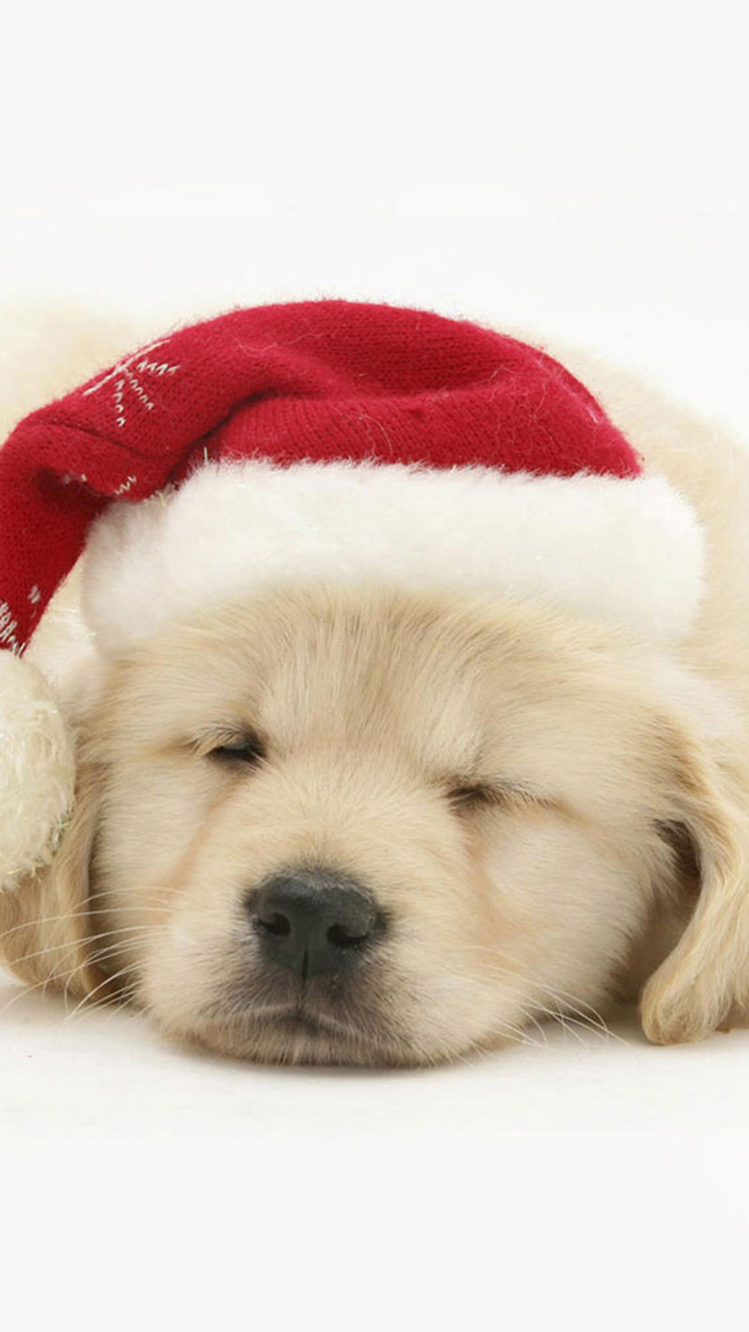 Cute Puppy In Christmas Hat iphone images.