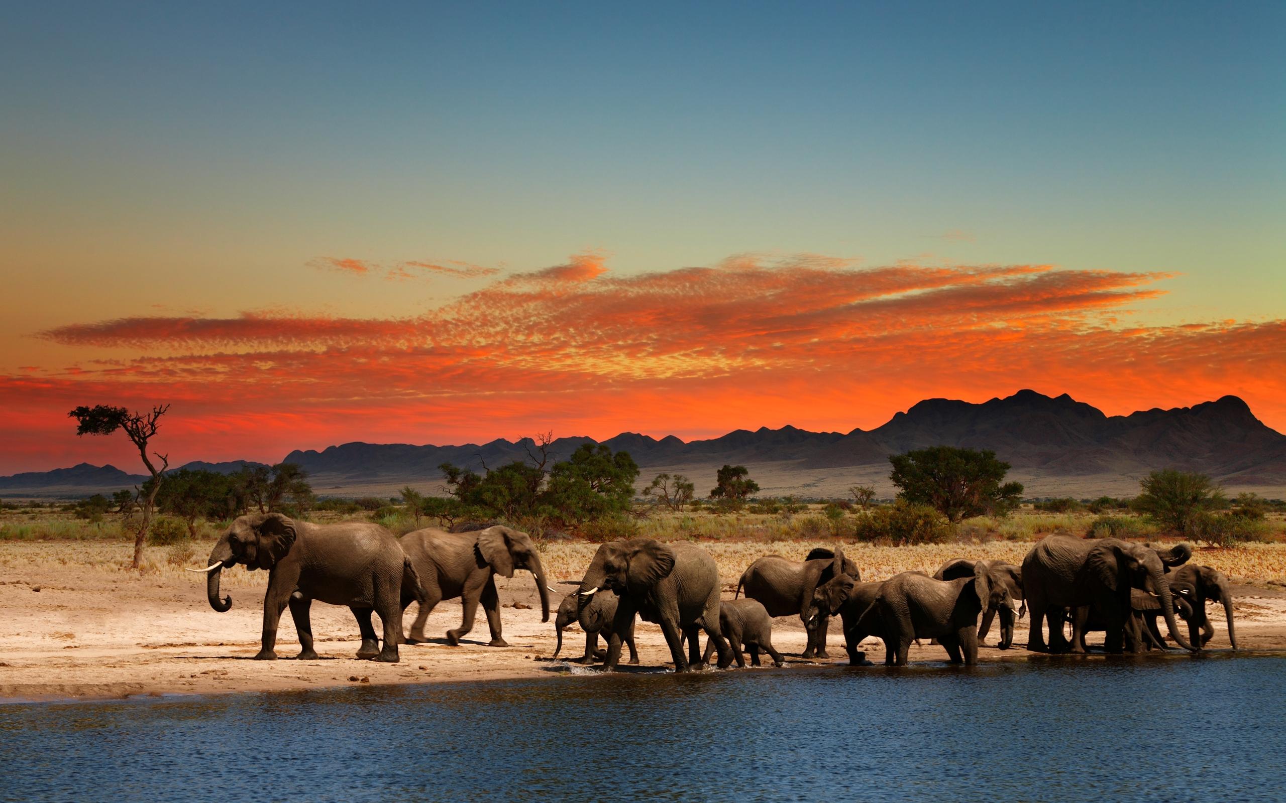 Desktop Elephant HD Wallpapers ...
