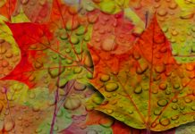 Fall iPhone Wallpapers Leaves.