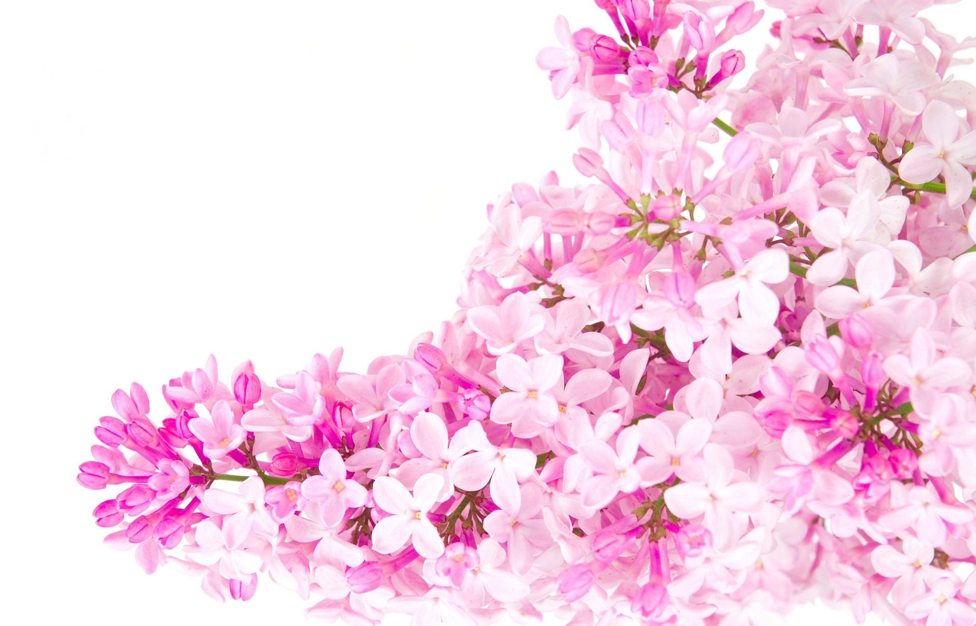 Flower backgrounds tumblr pixelstalk invitation pink flower wallpaper tumblr flower name pinky mightylinksfo