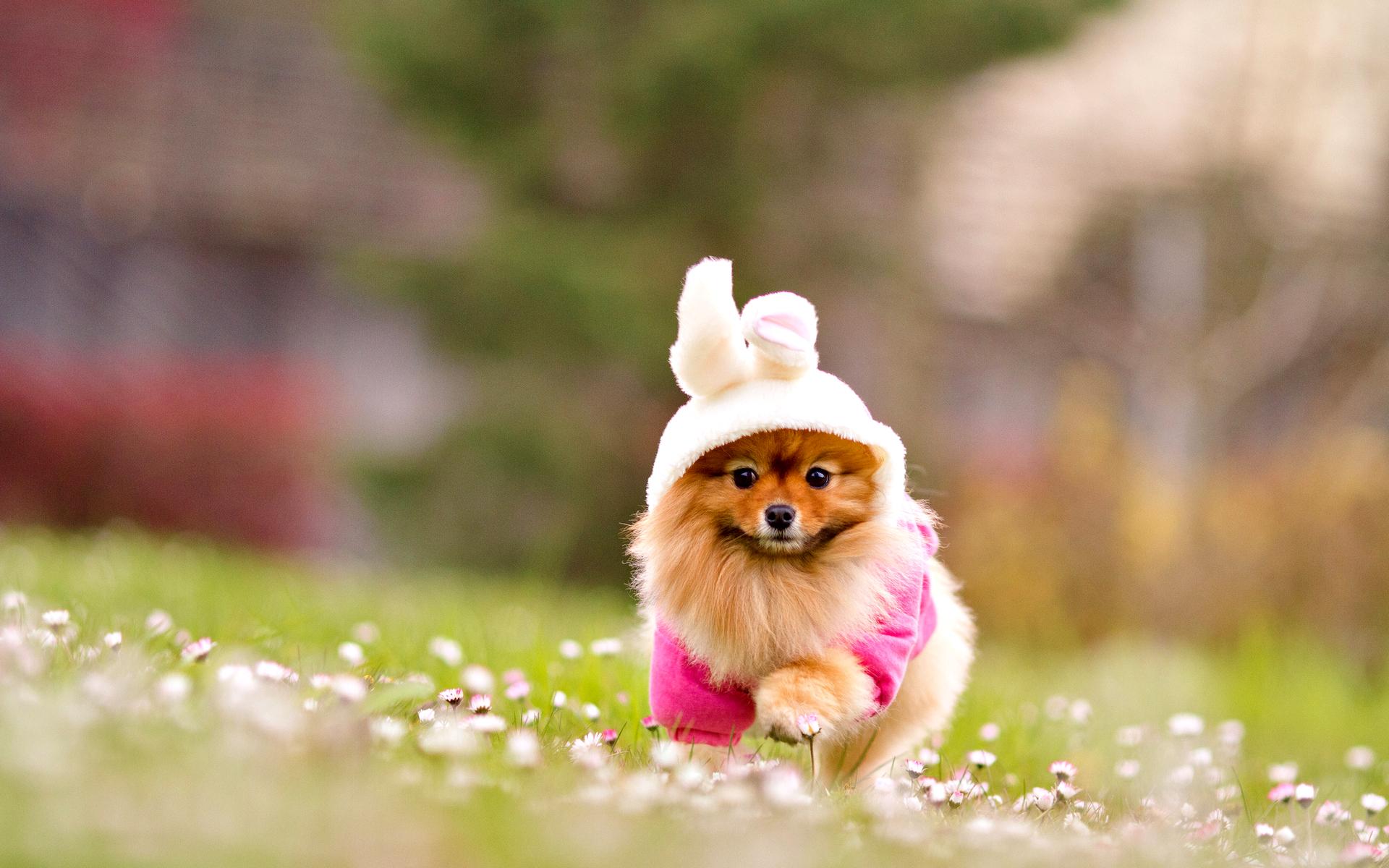 cute puppy dog lovely pixelstalk
