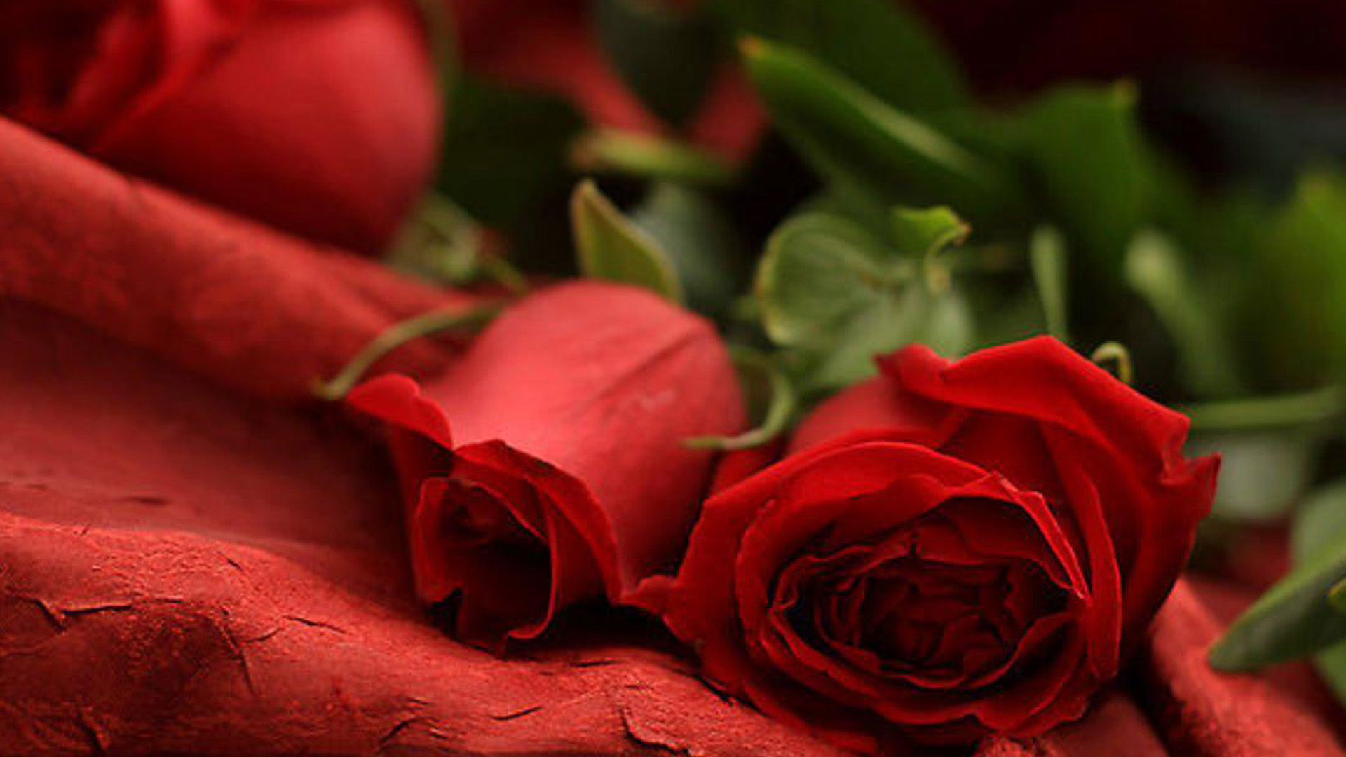 red rose romantic wallpaper