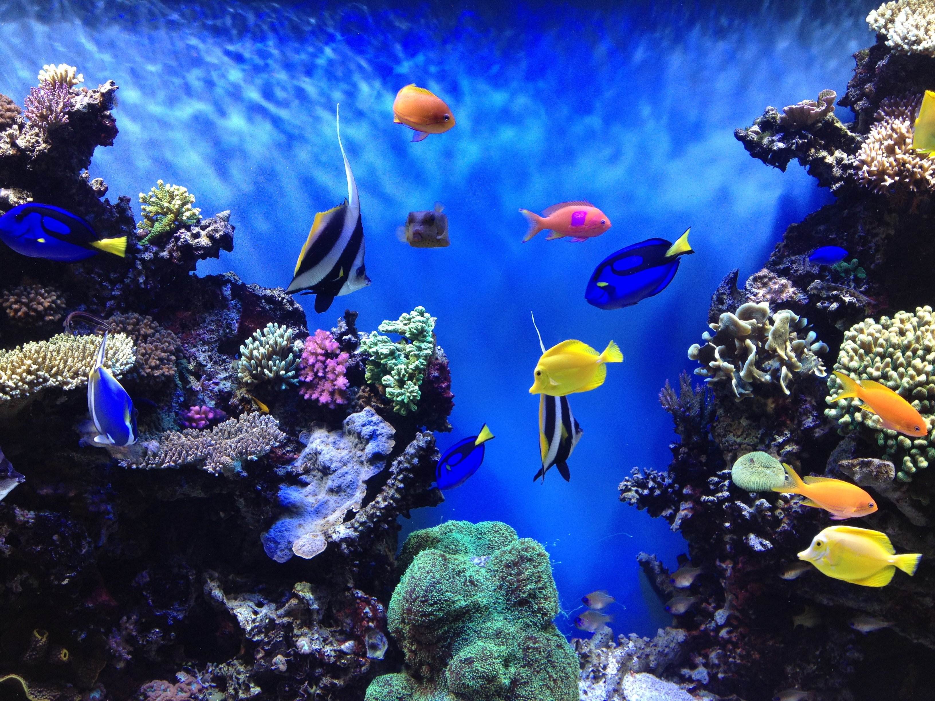 Aquarium backgrounds download free pixelstalk net Aquarium free days