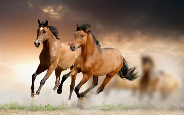 Desktop HD Horse Pictures.