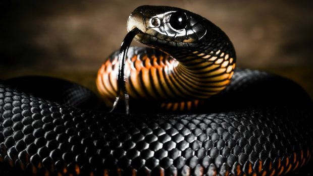 Download Anaconda Photo.