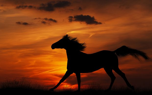 Free HD Horse Backgrounds Desktop.