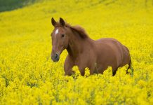 Free horse hd wallpapers.