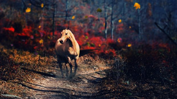 Horse Backgrounds.