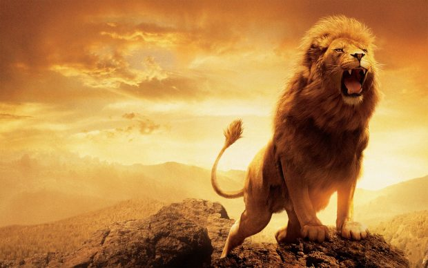 Aslan Narnia HD Wallpaper.