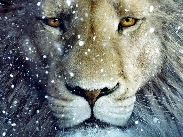 Aslan Narnia Wallpaper Widescreen.