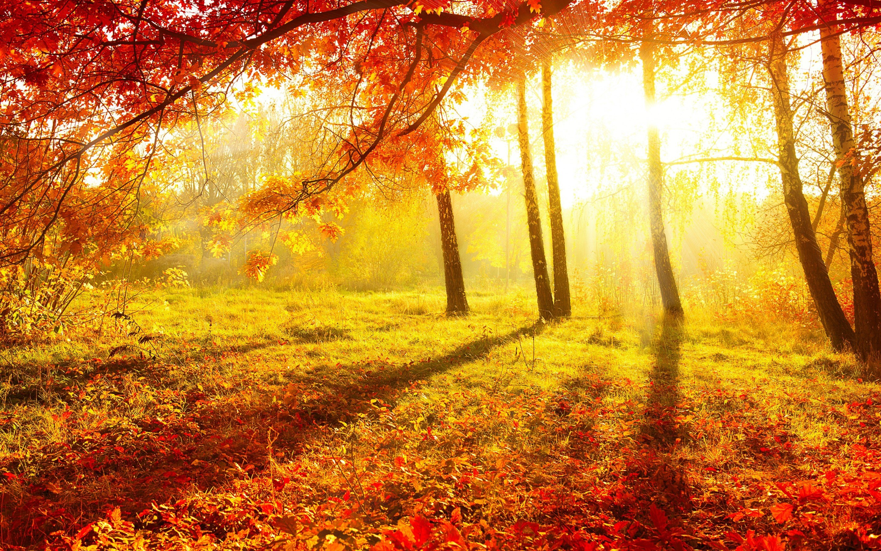 Autumn Forest HD Background.