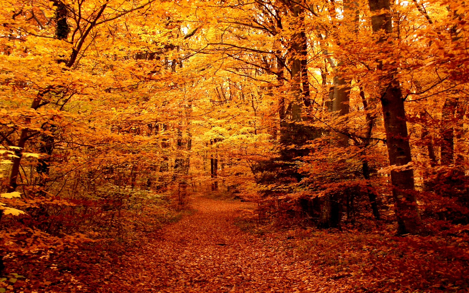 Autumn Forest HD Wallpaper.