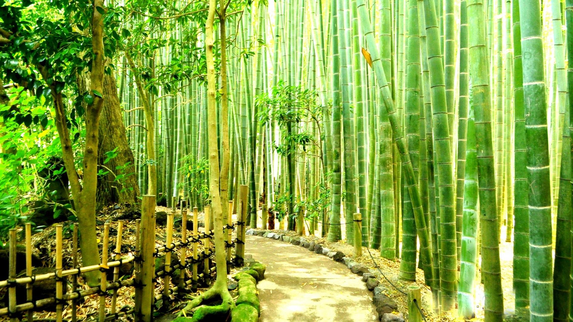 Bamboo Forest HD Wallpaper   PixelsTalk.Net