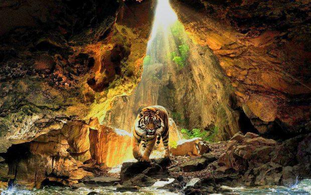 Cool Bengal Tiger Hi Res.