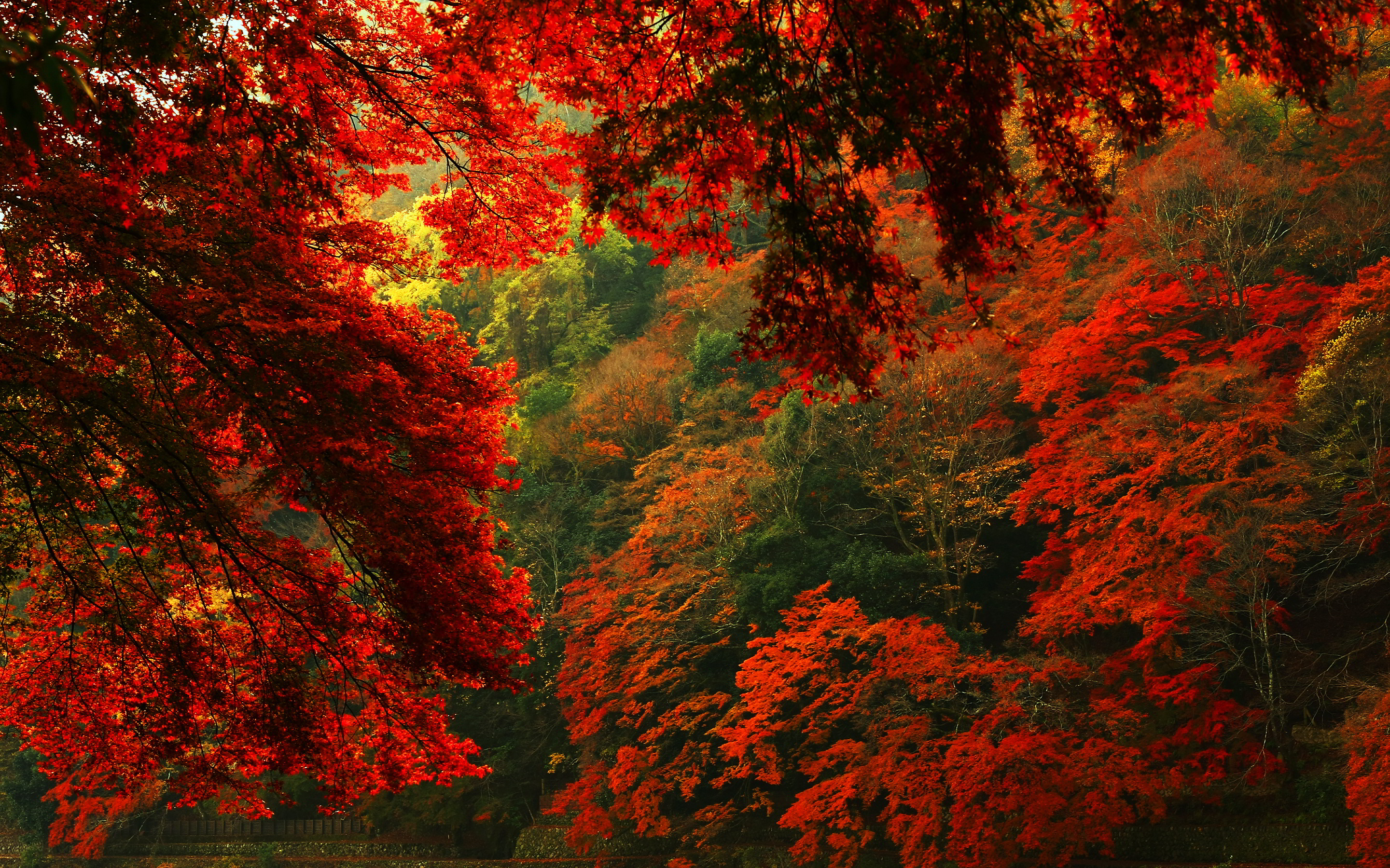 Autumn Forest Background Download Free