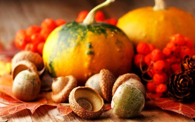 Cute Thanksgiving Background HD.