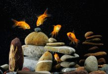 Desktop Fish Tank HD Images.