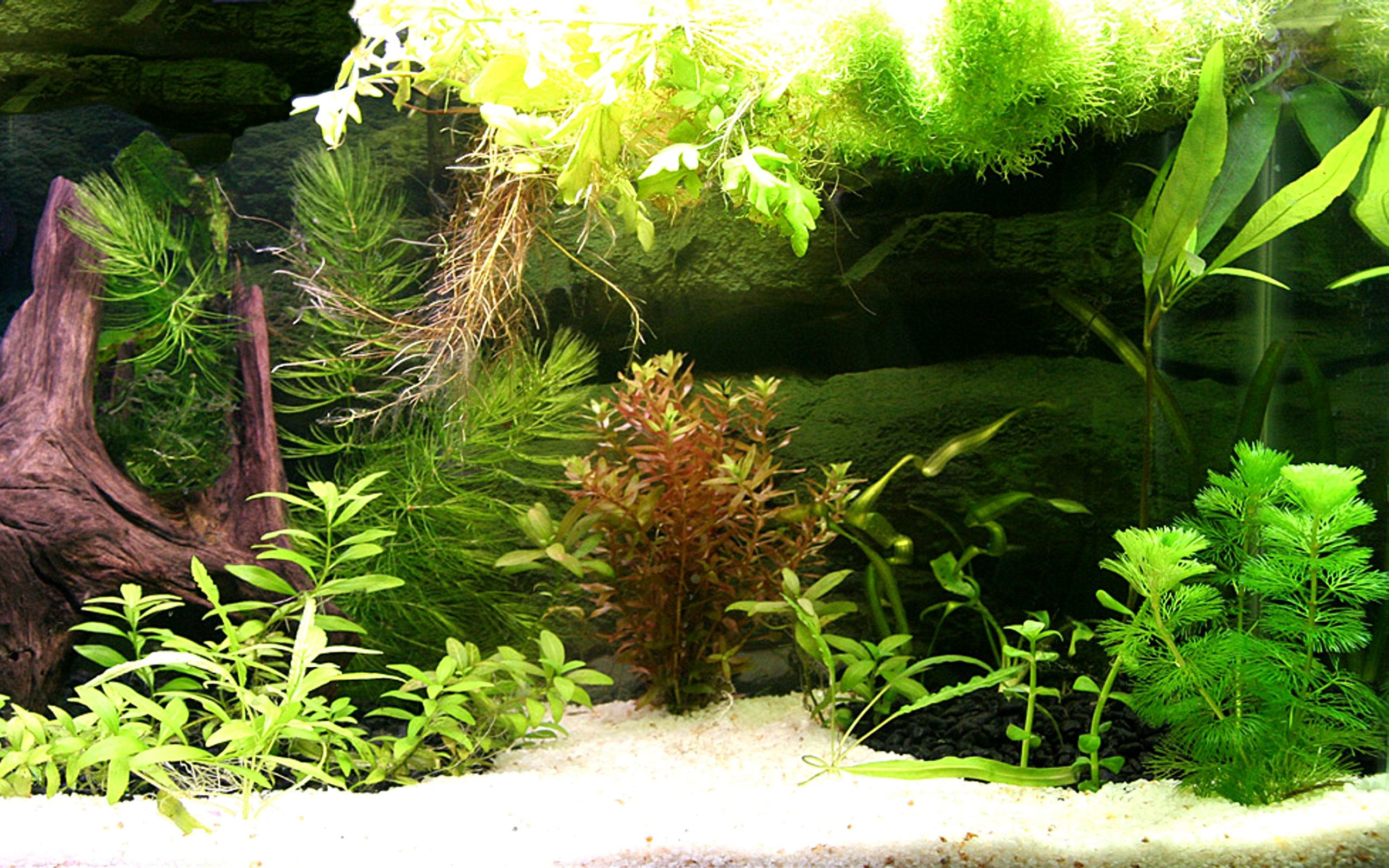 Fish tank backgrounds pixelstalk net - 3d ruckwand aquarium 150x60 ...