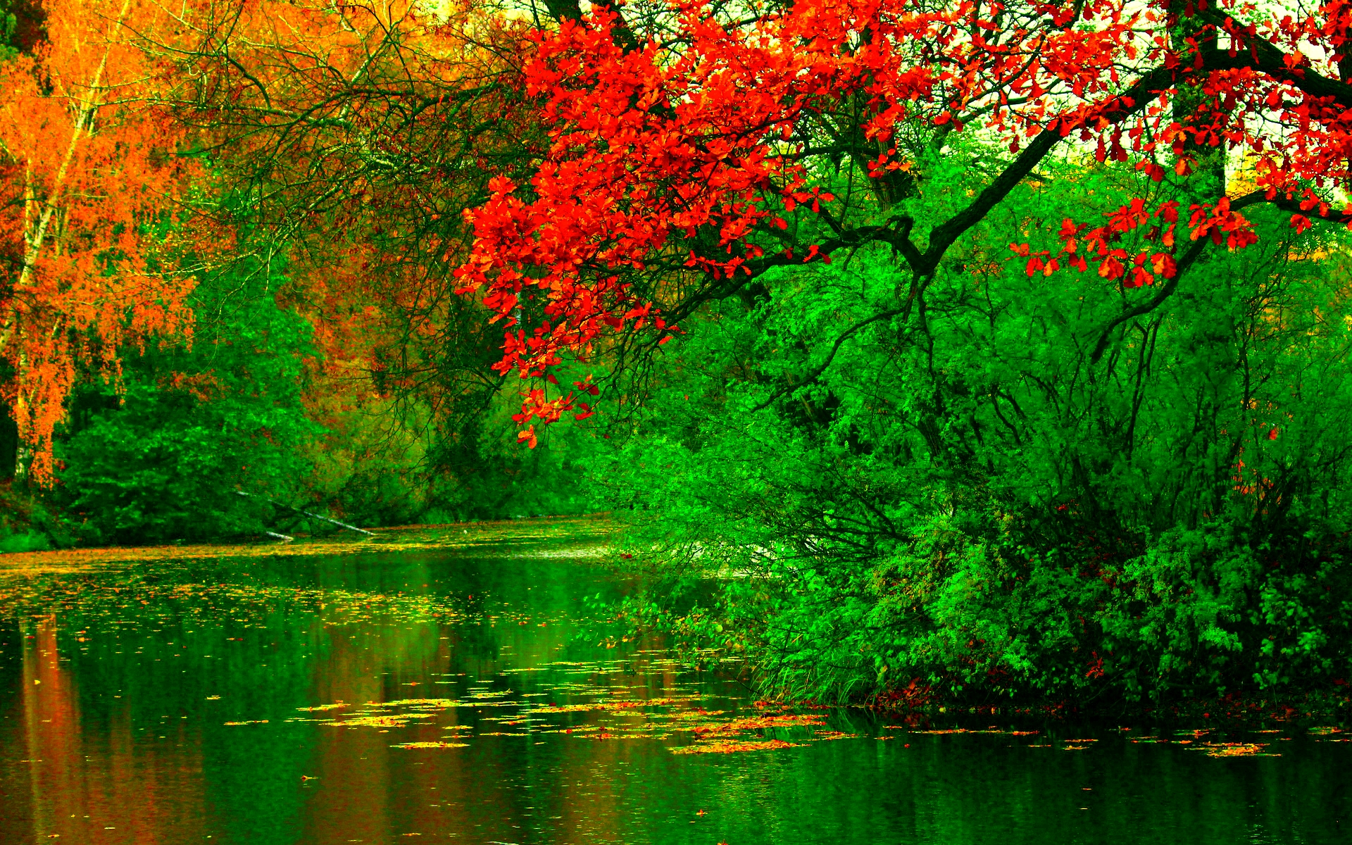 Autumn River Background.