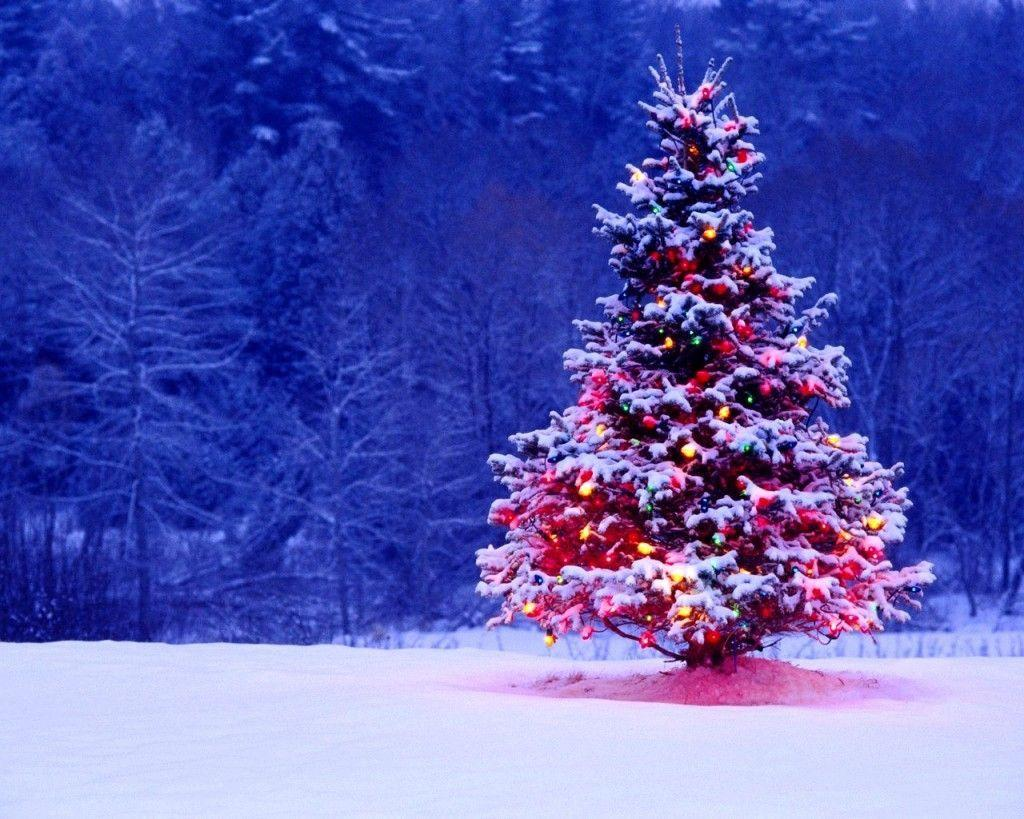 Christmas Tree Wallpaper Hd Download Full Pixelstalk Net