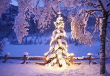 Christmas tree lights wallpaper background HD.