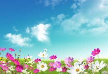 Desktop Spring HD Wallpapers Photos Download new.