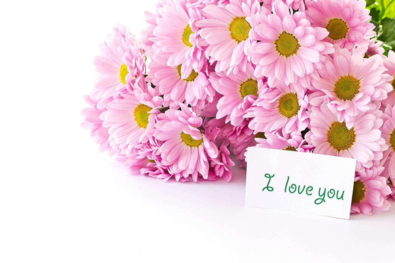 flower i love you wallpaper | pixelstalk