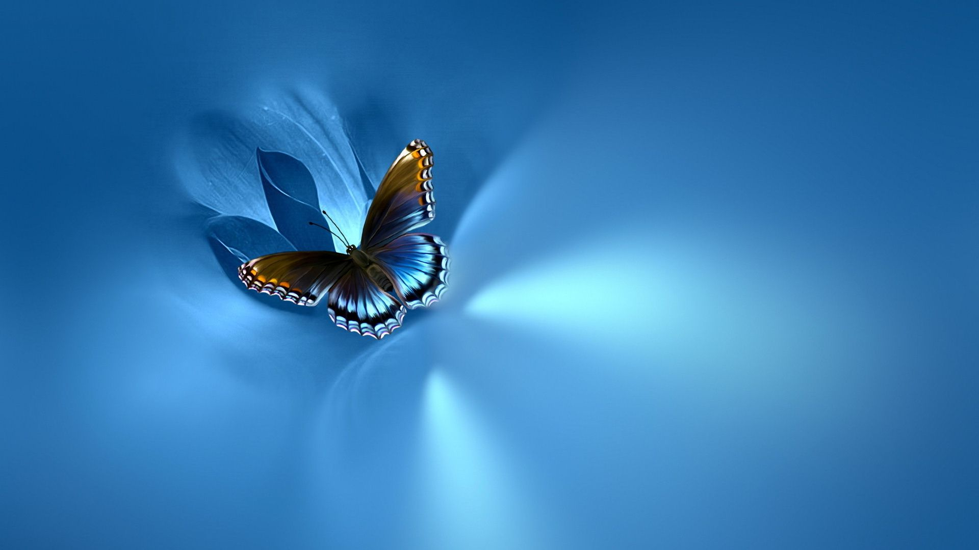 Blue Butterfly Wallpaper Desktop