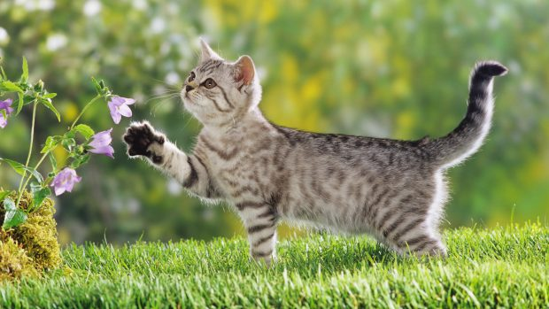 Download Cat Backgrounds Desktop.