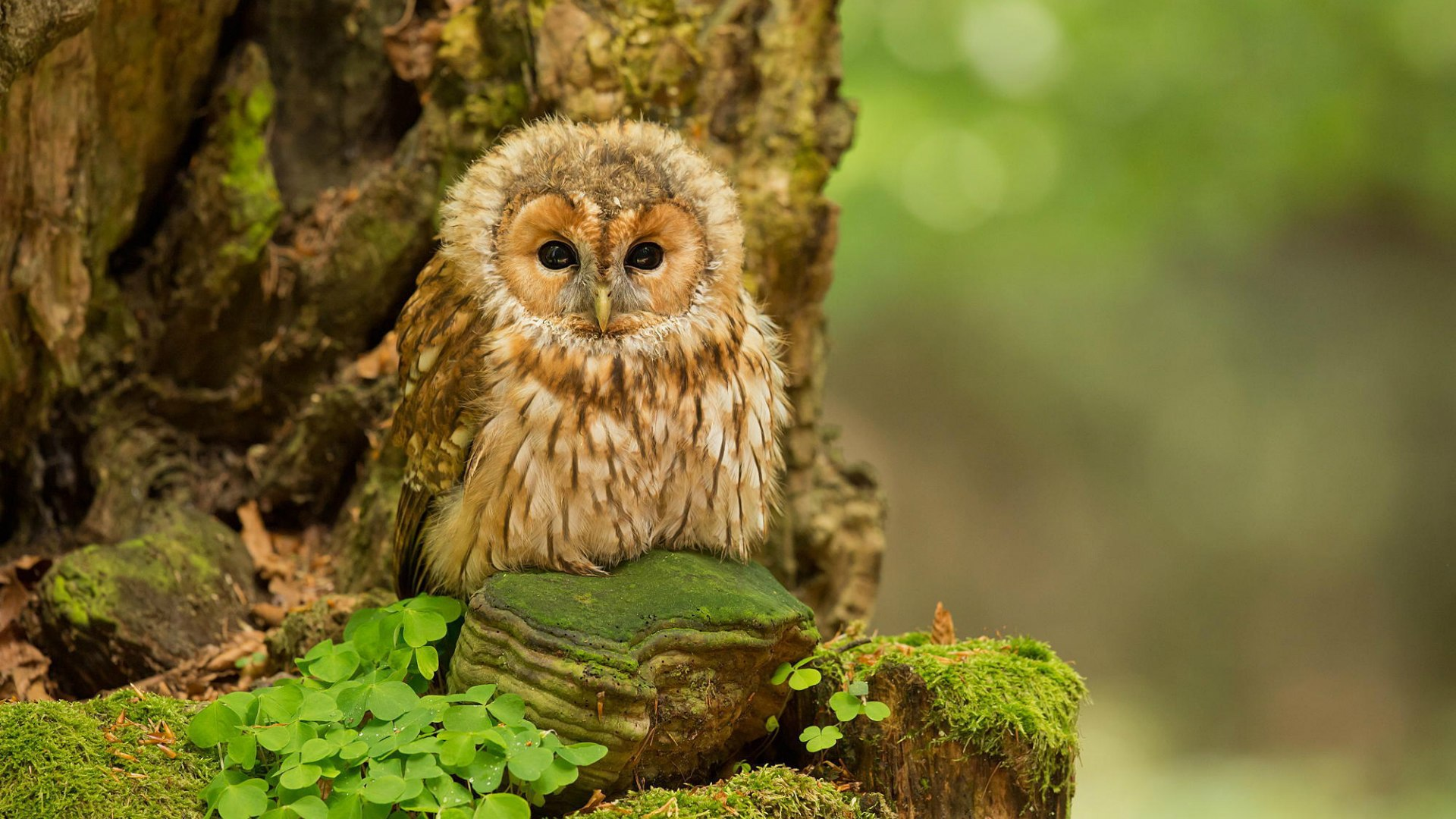 Cute Owl Image Free Download.