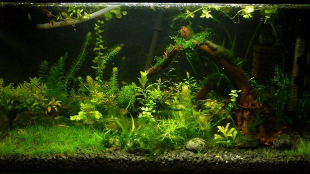 Cool Aquarium Wallpaper HD 1.