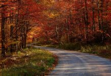 Download Free Fall Nature Wallpaper 1.
