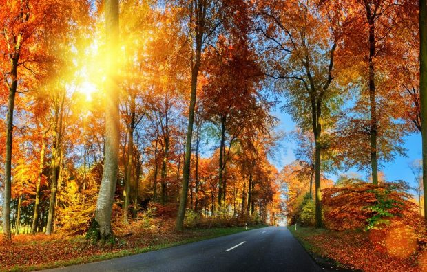 Fall leaves images wallpaper 1.
