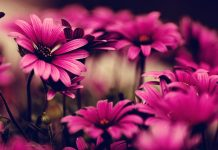 Flowers Wallpapers 4K for Desktop.