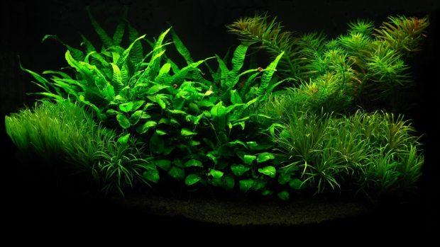 Green Plant in the Black Aquarium.