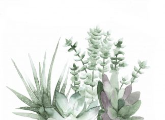 Aesthetic Minimalist Plant Wallpaper High Resolution.