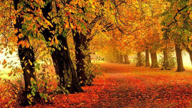 Beautiful 4K Autumn Wallpaper HD.