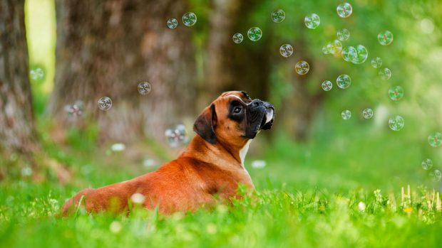 Cool Dog Backgrounds 1080p.