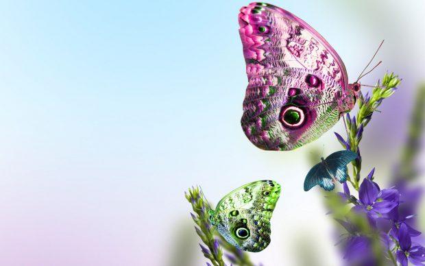 Cute Butterfly Wallpaper for PC.