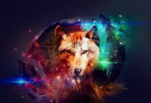 Cool Galaxy Wolf Wallpaper Free Download.