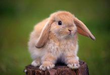 Cute Bunny Backgrounds HD.